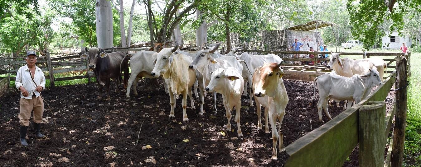 """La Elaboración de Proyectos para Fomentar el Desarrollo Rural Bajo en Carbono"""" en la zona Puuc, Yucatán."""